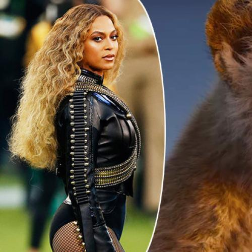 Queen Beyoncé's Nala Speaks In The New Lion King Teaser