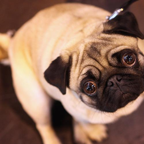 Great News For Dog Owners! Not So Great News For Cat Owners