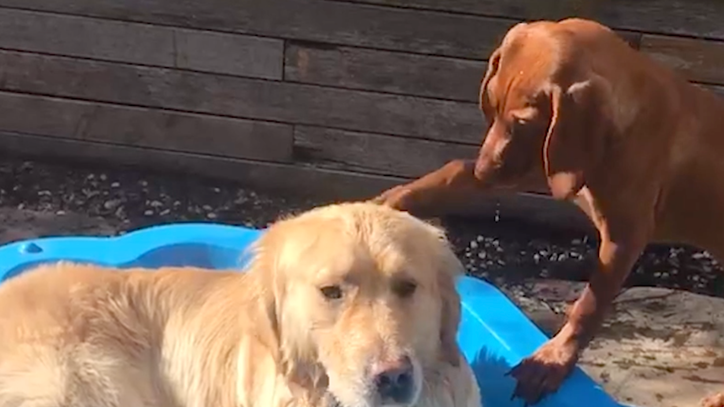 These Dog Besties Might Be The Cutest Thing On The Internet