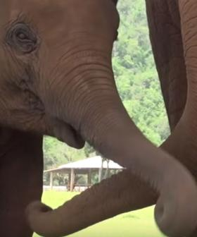 The Beautiful Moment An Elephant Takes Caretaker To See Newborn Baby And Asks For Lullaby