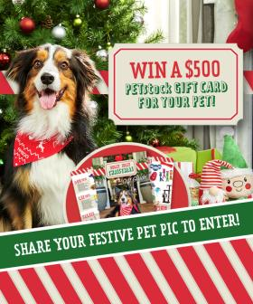 Win A $500 PETstock Gift Card For Your Pet