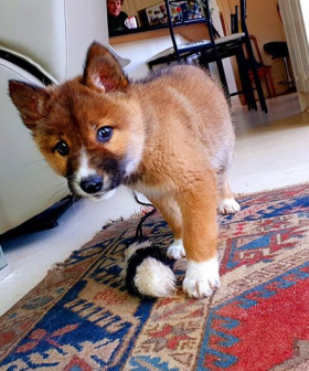 Woman Adopts 'Puppy' After It Was Dropped By An Eagle In Her Backyard