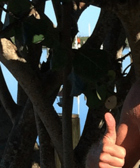 Greg Norman Shows Off His Incredible Body Transformation