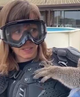 Scottish Reporter Cops Hilarious 'Drop Bear' Prank On Kangaroo Island