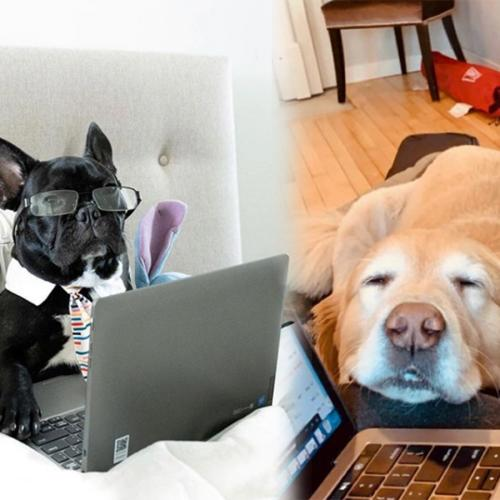 Just 15 Things That Your Dog Is Definitely Thinking While You're Working From Home