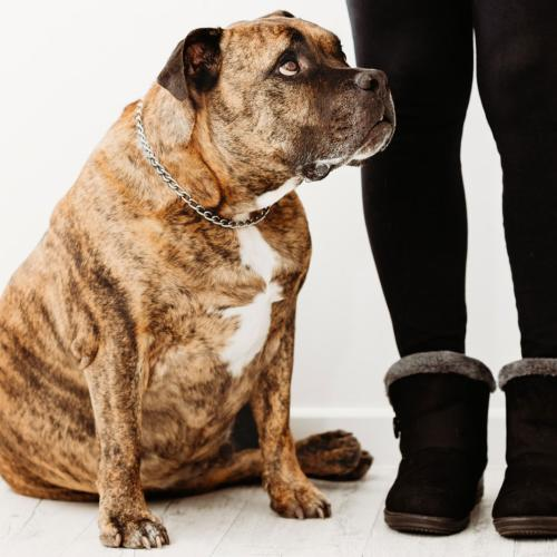 Our Dogs & Cats Are Getting Fat, And Self-Isolating With Them Could Be Making It Worse