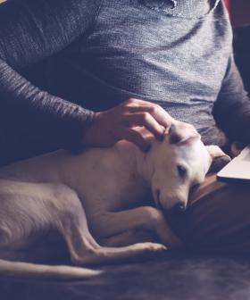 Renters In SA Could Soon Have The Right To Keep Pets Under Proposed New Laws