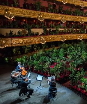 Barcelona's Opera Has Celebrated Its Reopening By Playing To An Audience Of...Plants