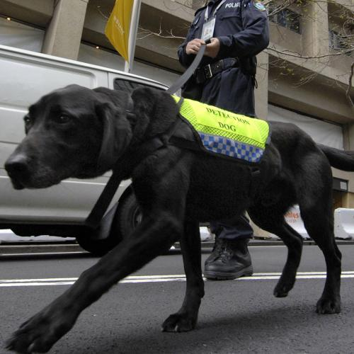 SA Could Soon Start Using Sniffer Dogs To Detect COVID-19