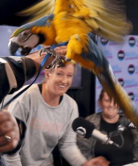 Jodie & Soda Meet Dexter The Macaw...Chaos Ensues!