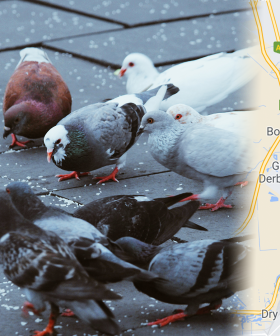 Adelaide Woman Threatened With $30K Fine For Feeding The Birds