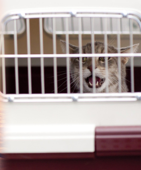 Cats Send Flight Into Chaos After Escaping, Leaving Passengers To Hunt Them Down