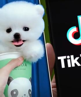 Graphic Video Of Live Suicide Hidden Behind Puppy Footage On TikTok