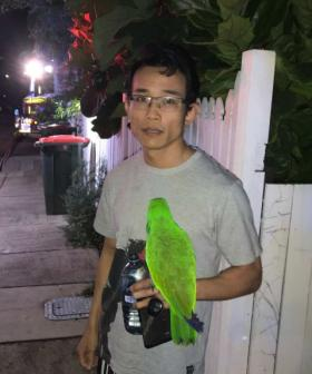 A Pet Parrot Has Saved His Owner From A House Fire In Brisbane