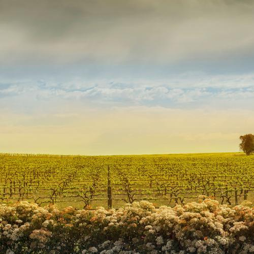 South Aussie Wineries Have Dominated Australia's Top 50 Vineyards Of The Year