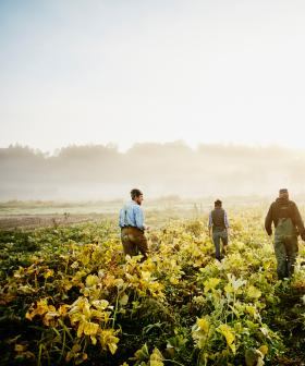 Pacific Island Seasonal Workers To Be Flown Into SA For Fruit Picking