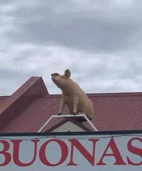 And This Little Piggy...Mysteriously Appeared On A Roof In Adelaide