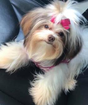 Dog Owner Slams Groomer After Makeover Goes Horribly Wrong