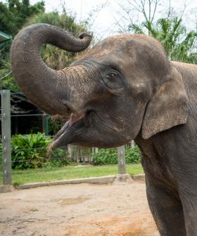 A Dad Is In Big Trouble For Making One Bad Move At The Zoo