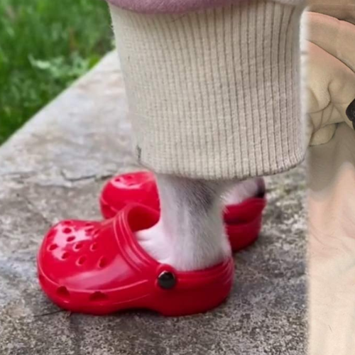 You Can Now Get Crocs For Your Dog, Just In Time For Winter!
