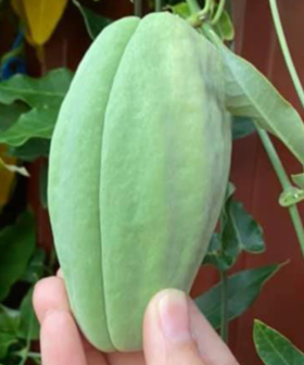 Aussie Woman Warned Over Plant Growing In Her Garden As It's Really Dangerous