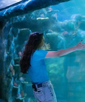Amy Sharks Tour Of Sydney Aquarium Takes A Turn!